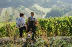 Fascinant week-end en Ardèche, d'Hermitage en St Joseph, de Cornas en St Péray et Sud Ardèche