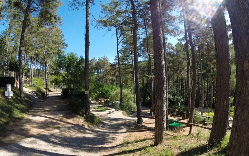 Les pins d'Ucel