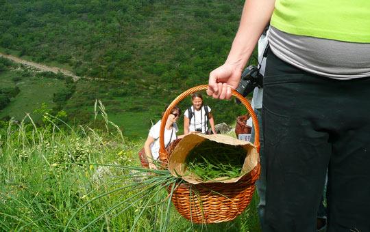 Ardèche randonnées